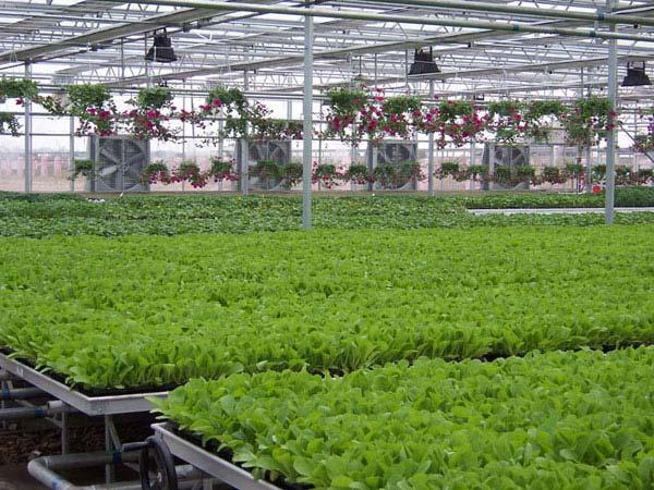 智能育苗温室