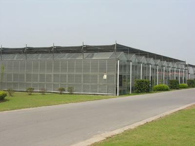 阳光温室大棚