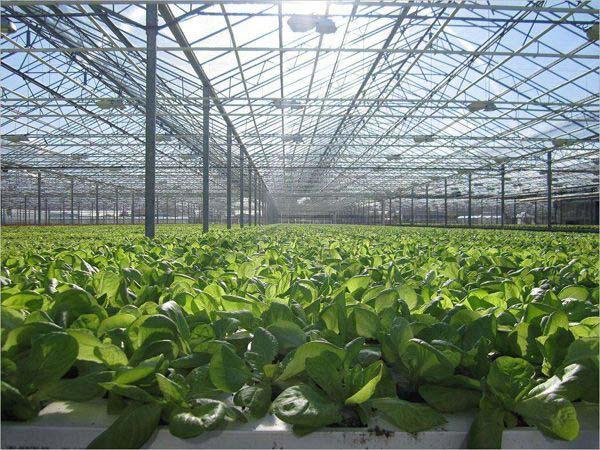 种植玻璃温室