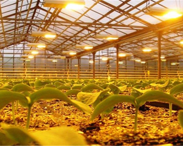 温室补光灯
