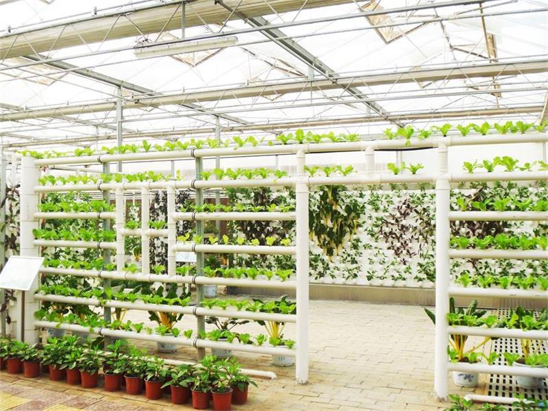 无土栽培基质栽培